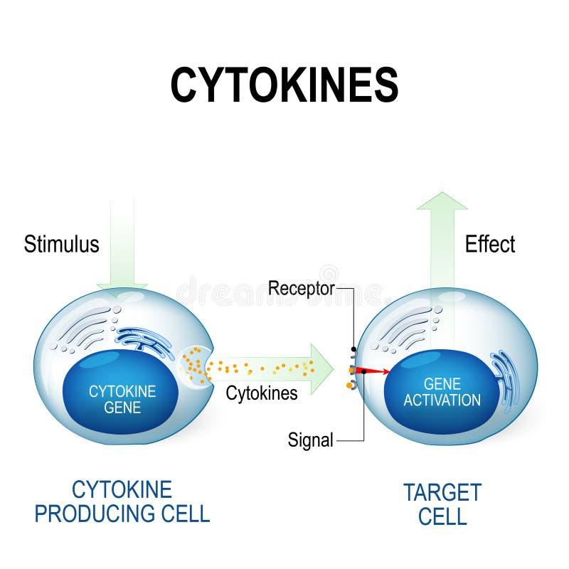 Το Cytokines περιλαμβάνει τις ηντερφερόνες, interleukins, lymphokines διανυσματική απεικόνιση