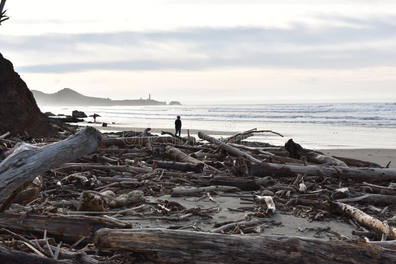 Το Driftwood έπλυνε επάνω στην παραλία αχατών στοκ εικόνες