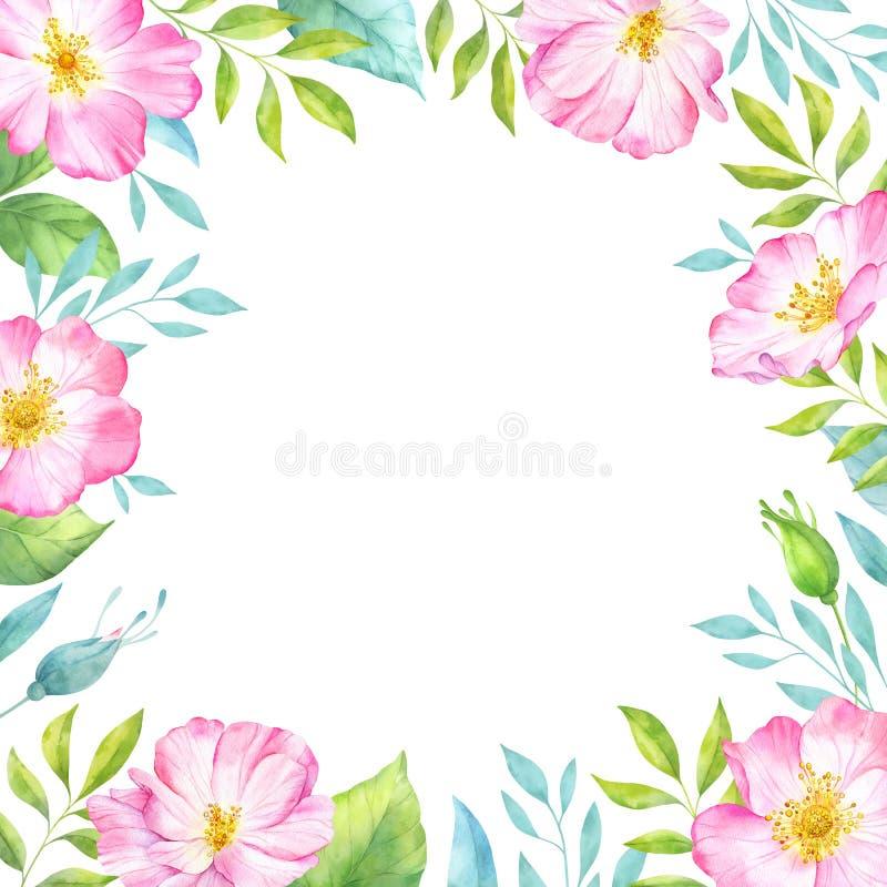 Το floral πλαίσιο Watercolor με ρόδινο άγριο αυξήθηκε λουλούδια, οφθαλμοί, πράσινοι φύλλα και κλάδοι απεικόνιση αποθεμάτων