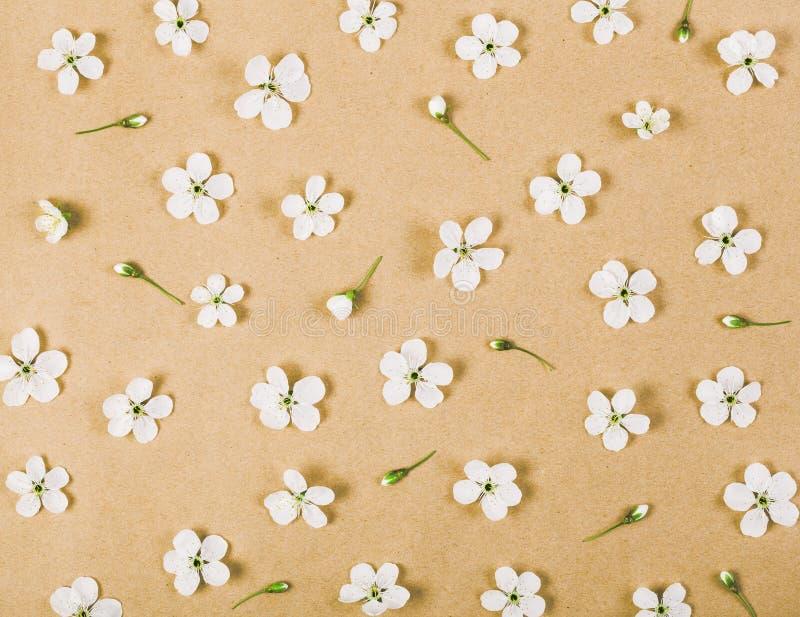 Το Floral σχέδιο φιαγμένο από άσπρο ελατήριο ανθίζει και οφθαλμοί στο υπόβαθρο καφετιού εγγράφου Επίπεδος βάλτε στοκ εικόνες με δικαίωμα ελεύθερης χρήσης