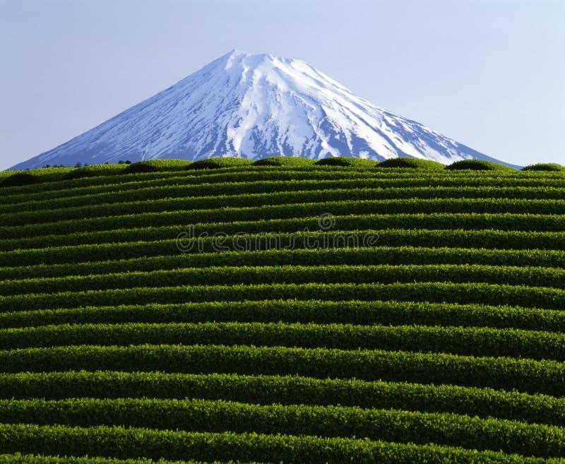 το fuji ΙΧ επικολλά στοκ φωτογραφίες