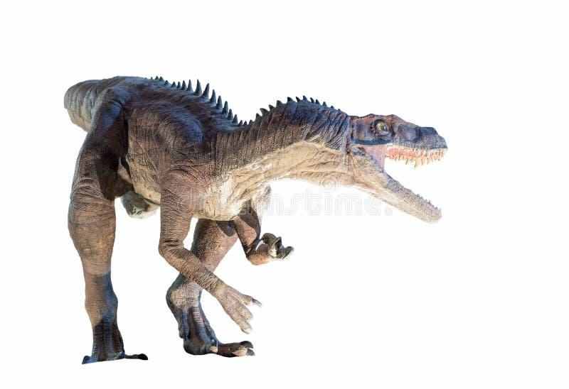 Αποκατάσταση ενός (ischigualastensis Herrerasaurus) δεινοσαύρου Herrerasaurus που απομονώνεται στοκ εικόνα με δικαίωμα ελεύθερης χρήσης