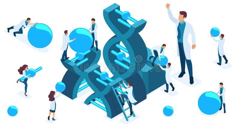 Το Isometric σύνολο γιατρών και επιστημόνων που μελετούν τη δομή του DNA, μόρια ένδυσης επιστημόνων, πραγματοποιεί τα πειράματα διανυσματική απεικόνιση