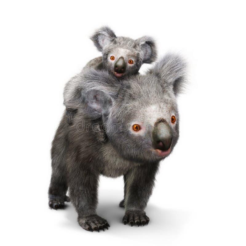 Το Koala αφορά και το μωρό της που κοιτάζει προς τη κάμερα ένα άσπρο υπόβαθρο απεικόνιση αποθεμάτων