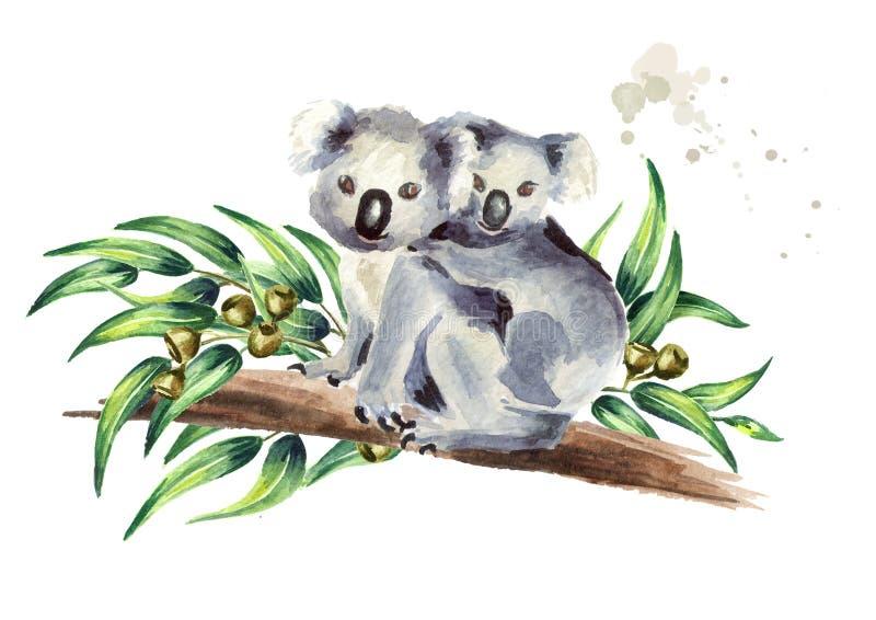 Το Koala αφορά με τη συνεδρίαση μωρών τον κλάδο ευκαλύπτων, που απομονώνεται στο άσπρο υπόβαθρο Συρμένη χέρι απεικόνιση Watercolo διανυσματική απεικόνιση