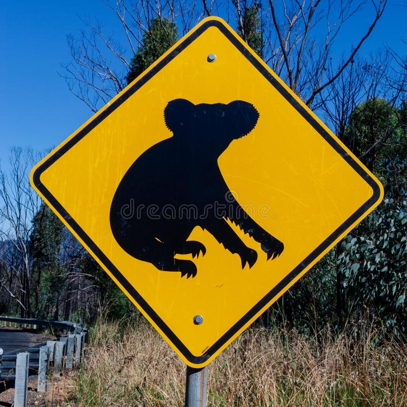 Το Koalas προσέχει τους - αυστραλιανά σημάδια που βρίσκονται κατά μήκος του δρόμου στοκ εικόνες