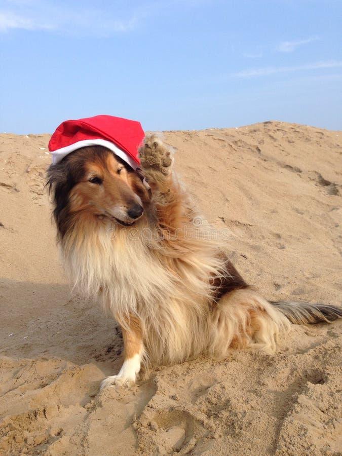 Το Lassie λέει γειά σου στοκ εικόνα