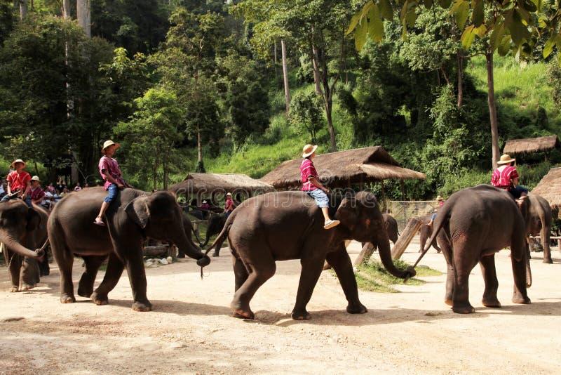 Το Mahout οδηγά τον ελέφαντά του σε βόρειο της Ταϊλάνδης στοκ εικόνες