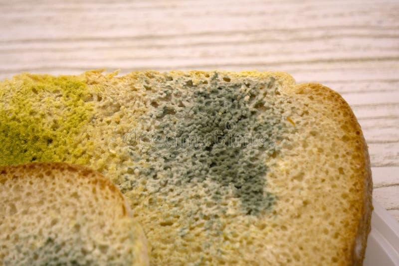 Το Moldy ψωμί, έληξε δεν μπορεί να φάει άλλα η ανασκόπηση απομόνωσε το λευκό στοκ φωτογραφίες