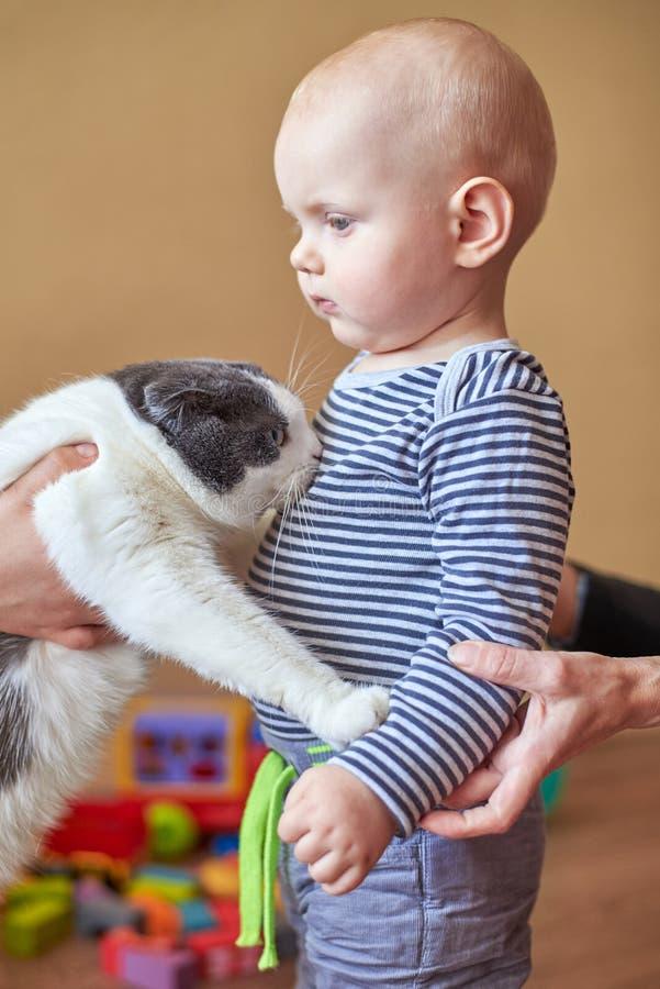 Το Mom εισάγει τη γάτα με το γιο της, το αγόρι φοβάται το ζώο στοκ εικόνες