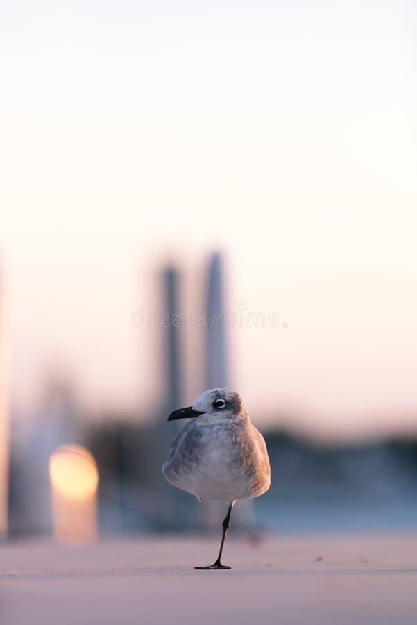 Το One-legged πουλί ταξιδεύει μια μαρίνα στη Φλώριδα στοκ εικόνα