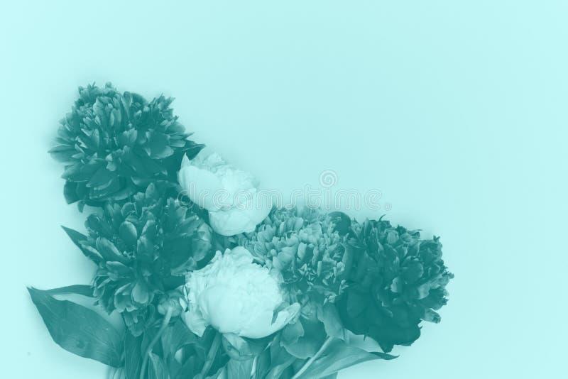 Το Peony ανθίζει την πορφυρή άσπρη εικόνα duotone ανθοδεσμών στοκ εικόνες