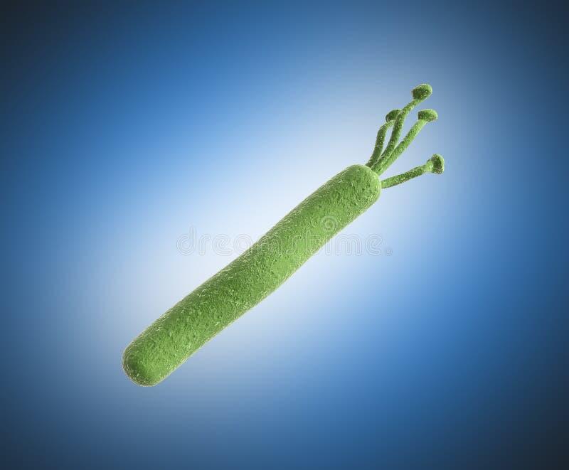 Το pylori Helicobacter τρισδιάστατο δίνει την εικόνα στο μπλε ελεύθερη απεικόνιση δικαιώματος