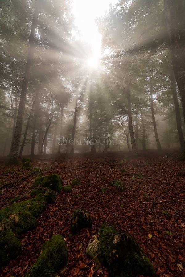 Το Sunrays το δάσος οξιών σε Entzia στοκ φωτογραφία με δικαίωμα ελεύθερης χρήσης
