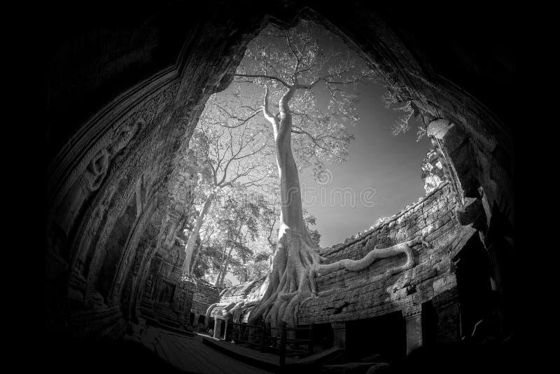 Το TA prohm Castle σε Siem συγκεντρώνει την επαρχία Καμπότζη στοκ φωτογραφίες