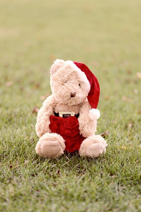 Το Teddy αντέχει κάθεται στο χορτοτάπητα απεικόνιση αποθεμάτων