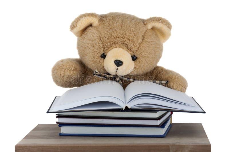 Το Teddy αφορά τη μελέτη που απομονώνεται το άσπρο υπόβαθρο στοκ φωτογραφίες