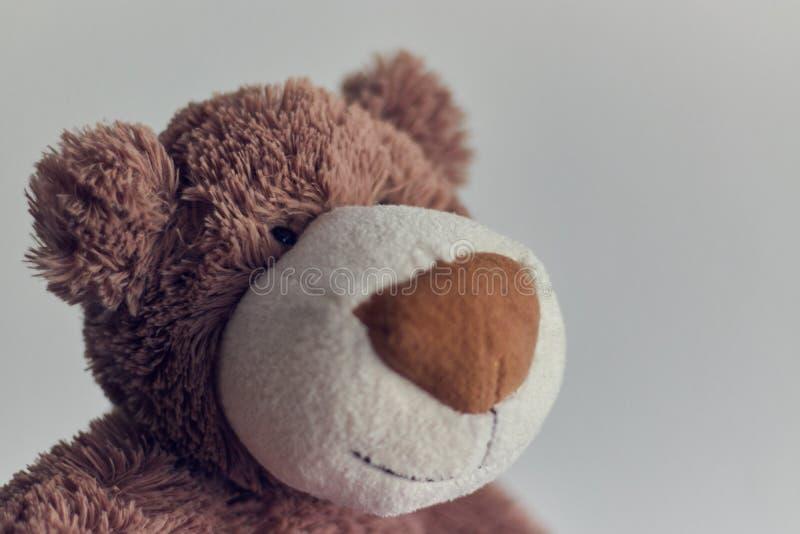Το Teddy το παιχνίδι teddy αφορά απομονωμένος ένα ελαφρύ υπόβαθρο κινηματογράφηση σε πρώτο πλάνο του κεφαλιού μιας teddy αρκούδας στοκ φωτογραφίες με δικαίωμα ελεύθερης χρήσης