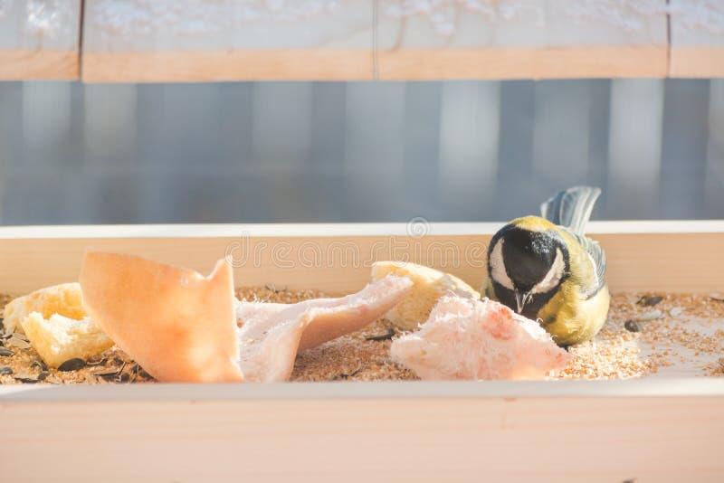 Το titmouse τρώει στη γούρνα στοκ φωτογραφία με δικαίωμα ελεύθερης χρήσης