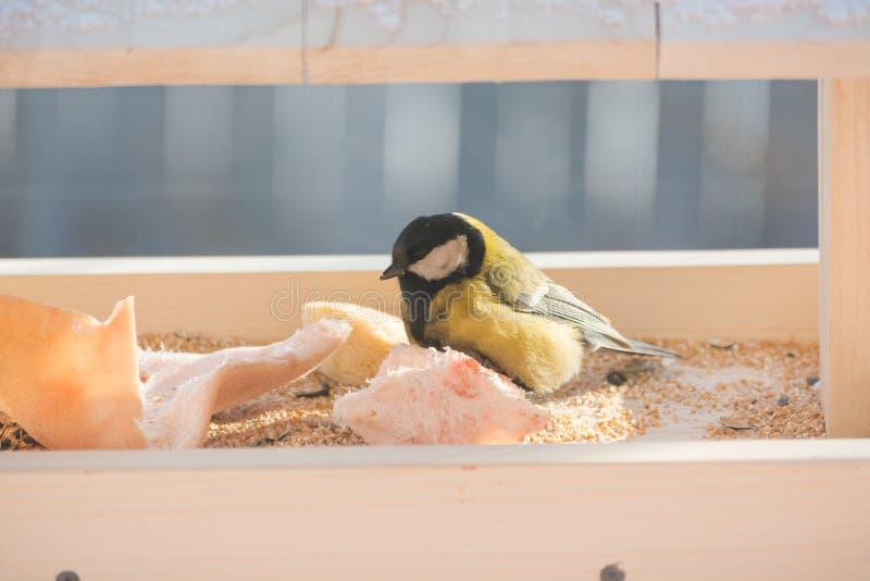 Το titmouse τρώει στη γούρνα στοκ φωτογραφία