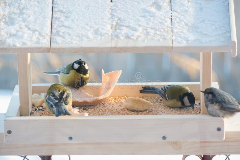 Το titmouse τρώει στη γούρνα στοκ φωτογραφίες με δικαίωμα ελεύθερης χρήσης