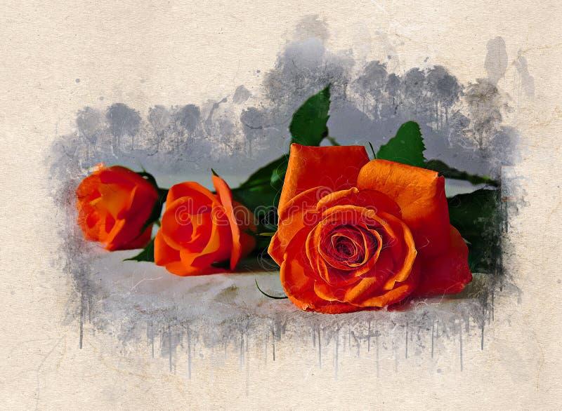 Το Watercolor χρωμάτισε τα όμορφα πορτοκαλιά τριαντάφυλλα ελεύθερη απεικόνιση δικαιώματος