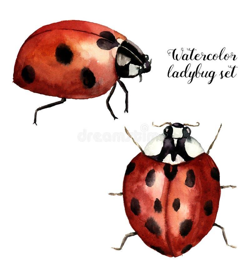 Το Watercolor ladybug έθεσε Συλλογή με τη λαμπρίτσα Απεικόνιση εντόμων που απομονώνεται στο άσπρο υπόβαθρο Για το σχέδιο ή την τυ απεικόνιση αποθεμάτων