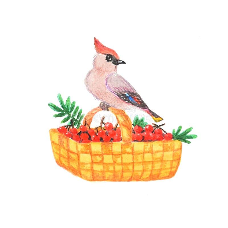 Το waxwing πουλί κάθεται σε ένα καλάθι με την κόκκινη σορβιά Θερινή συγκομιδή απεικόνιση αποθεμάτων