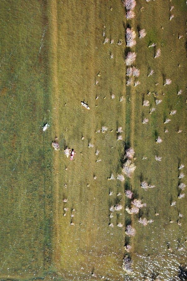 Τράπεζα λιμνών άποψης πουλιών το φθινόπωρο στοκ εικόνες