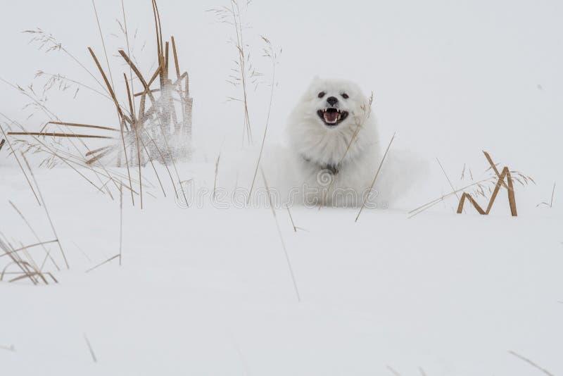 Τρέξιμο αν και το χιόνι στοκ φωτογραφία με δικαίωμα ελεύθερης χρήσης