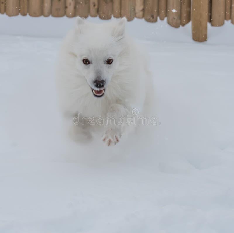 Τρέξιμο αν και το χιόνι στοκ εικόνες με δικαίωμα ελεύθερης χρήσης