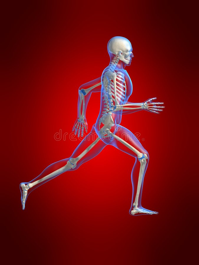 τρέξιμο ατόμων ανατομίας διανυσματική απεικόνιση