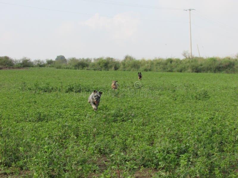 τρέξιμο σκυλιών στοκ φωτογραφίες με δικαίωμα ελεύθερης χρήσης