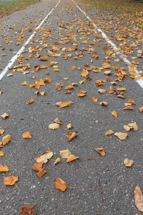 Τρέχοντας διαδρομή το φθινόπωρο με τα πεσμένα φύλλα στοκ εικόνες