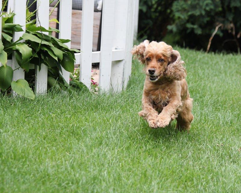 Τρέχοντας σκυλί στοκ εικόνα με δικαίωμα ελεύθερης χρήσης