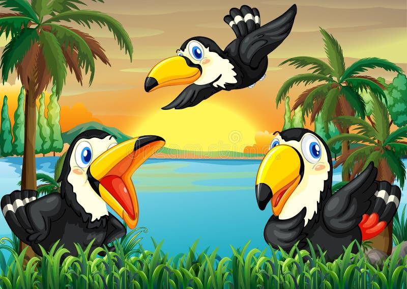 Τρία άγρια πουλιά κοντά στον ποταμό ελεύθερη απεικόνιση δικαιώματος