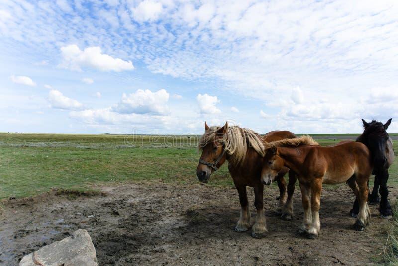 Τρία άλογα, δύο καφετί μαύρο στοκ φωτογραφίες με δικαίωμα ελεύθερης χρήσης