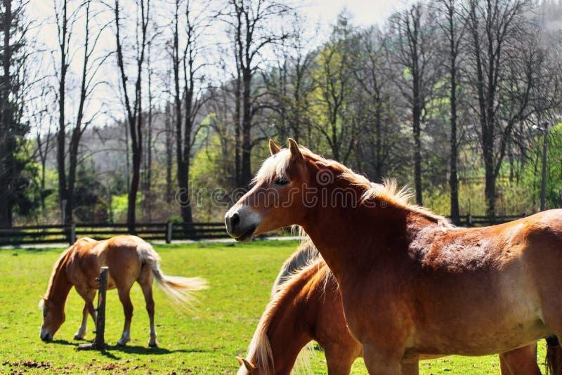 Τρία βόσκοντας άλογα στοκ φωτογραφία