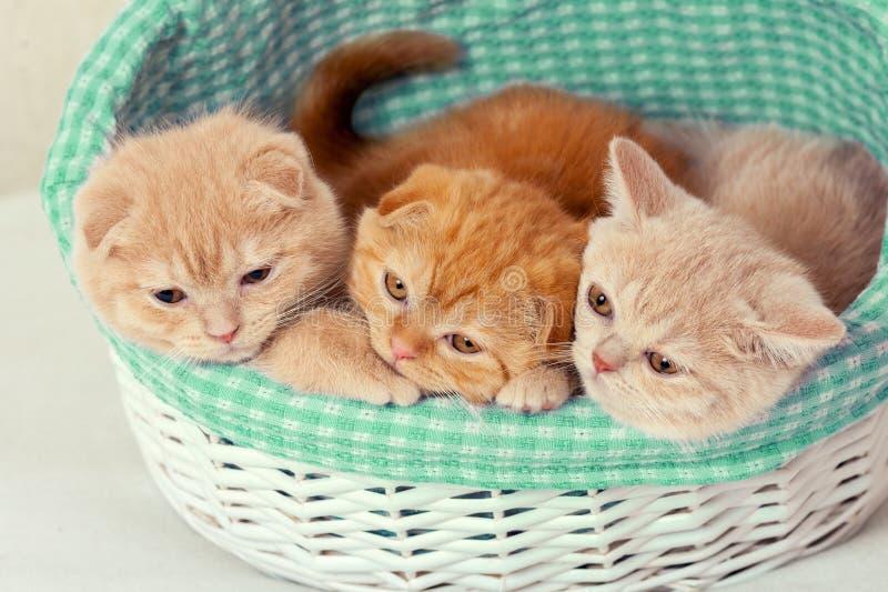 Τρία γατάκια σε καλάθι στοκ εικόνες