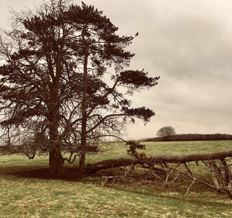 Τρία δέντρα, ένα πεσμένος στοκ εικόνες με δικαίωμα ελεύθερης χρήσης
