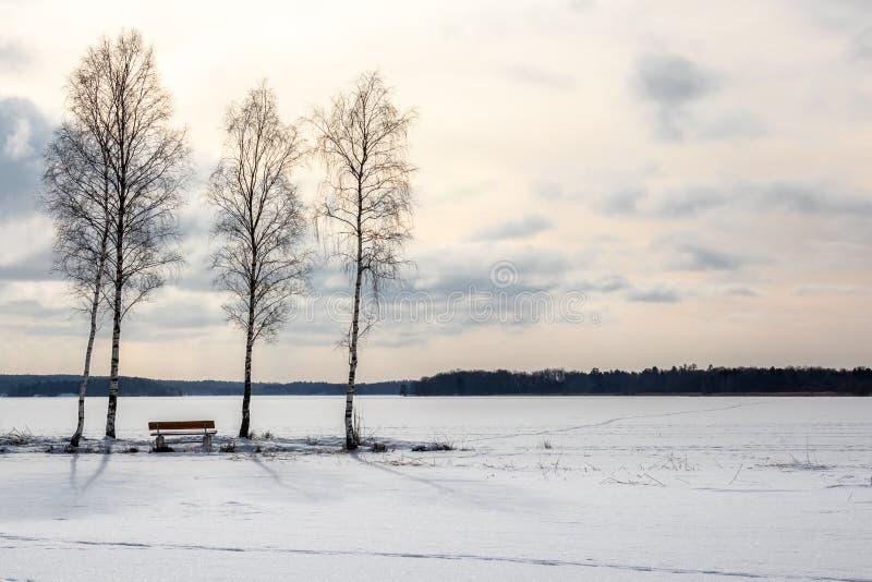 Τρία δέντρα και ένα bech, όμορφο τοπίο λιμνών απογεύματος αργά παγωμένο χειμώνας στοκ εικόνα με δικαίωμα ελεύθερης χρήσης