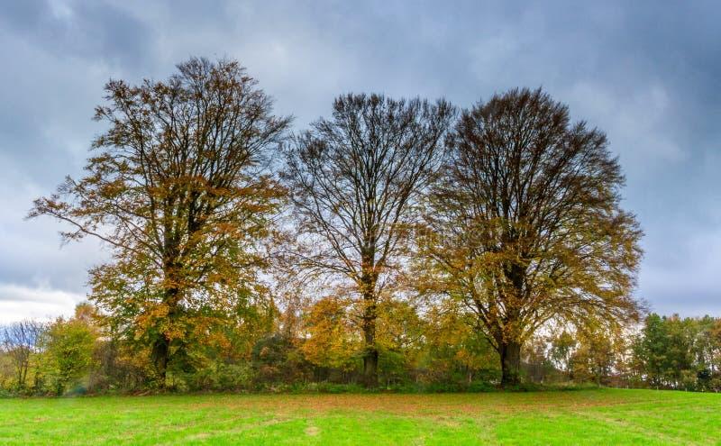 Τρία δέντρα σε ένα λιβάδι σε φθινοπωρινά χρώματα στοκ φωτογραφία με δικαίωμα ελεύθερης χρήσης