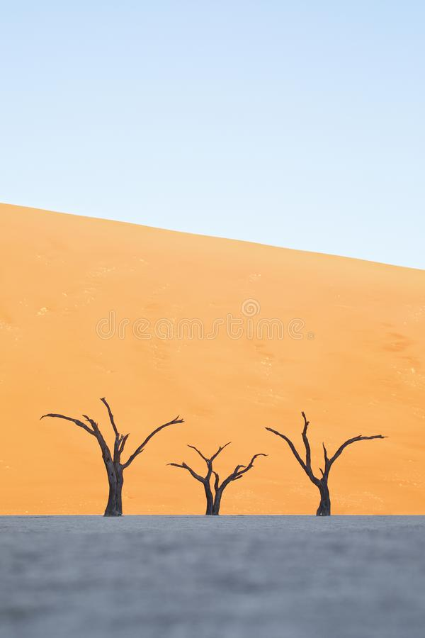 Τρία δέντρα σε Deadvlei, Ναμίμπια στοκ εικόνες με δικαίωμα ελεύθερης χρήσης