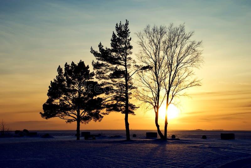 τρία δέντρα στοκ εικόνες