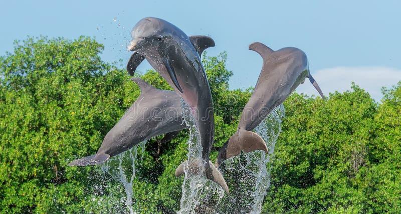 Τρία δελφίνια σε ένα άλμα από το νερό, στους παφλασμούς του νερού, σε ένα κλίμα των δέντρων και ενός μπλε ασυννέφιαστου ουρανού στοκ φωτογραφία με δικαίωμα ελεύθερης χρήσης