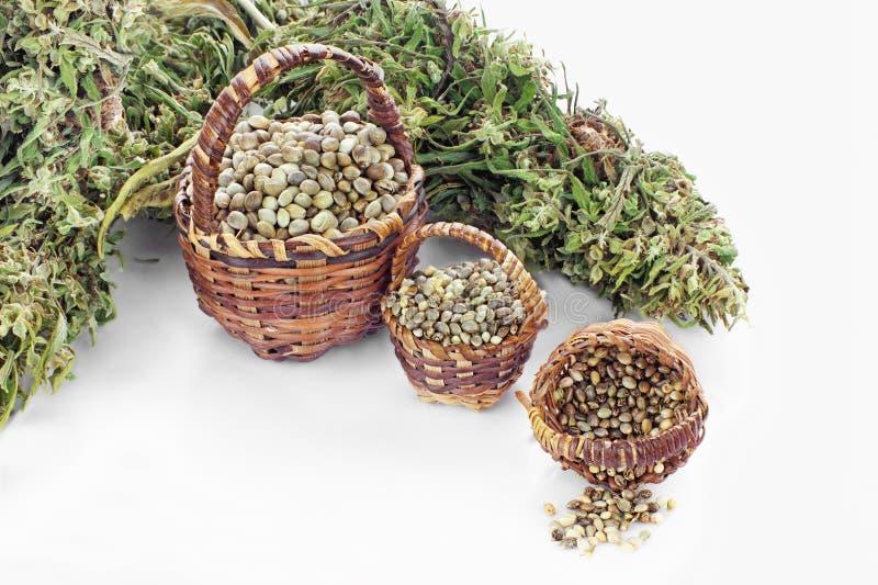 Τρία είδη σπόρων κάνναβης στοκ εικόνα με δικαίωμα ελεύθερης χρήσης