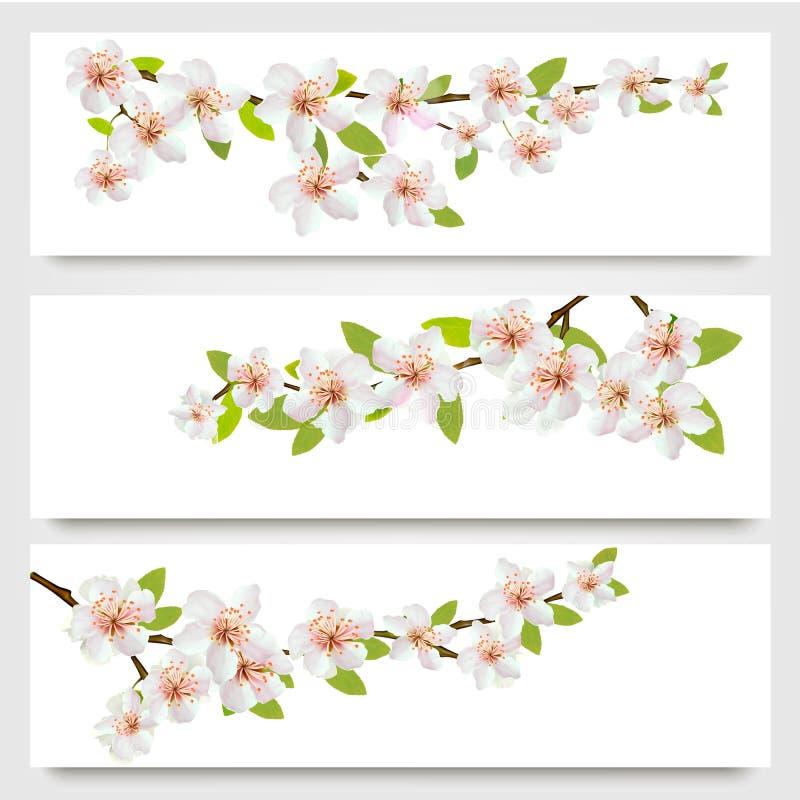 Τρία εμβλήματα κλάδων sakura διανυσματική απεικόνιση