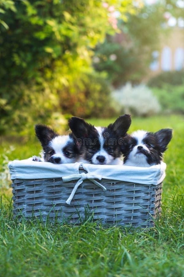 Τρία κατοικίδια ζώα στο καλάθι στοκ φωτογραφίες