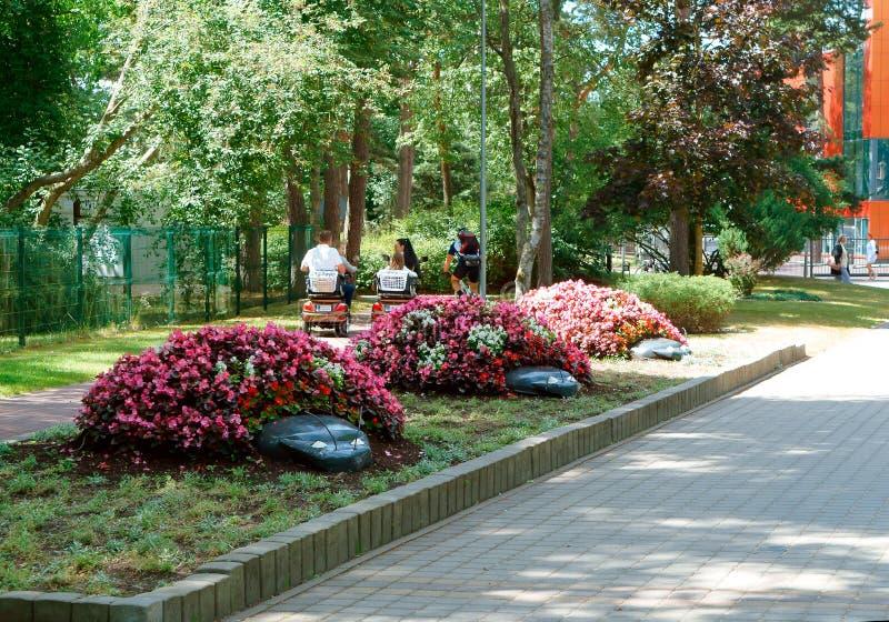 Τρία κρεβάτια λουλουδιών, όμορφα κρεβάτια λουλουδιών στα χρώματα topiary, στις 24 Ιουνίου 2018, οδός J Οδός Basanaviciaus, Palang στοκ εικόνες