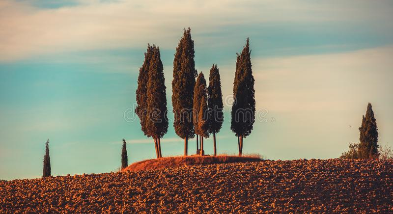 Τρία κυπαρίσσια στην Τοσκάνη, πανοραμικό τοπίο στον όμορφο ήλιο στοκ φωτογραφία με δικαίωμα ελεύθερης χρήσης